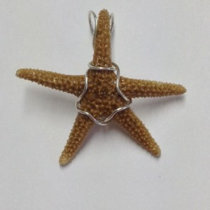 1607-12  small starfish